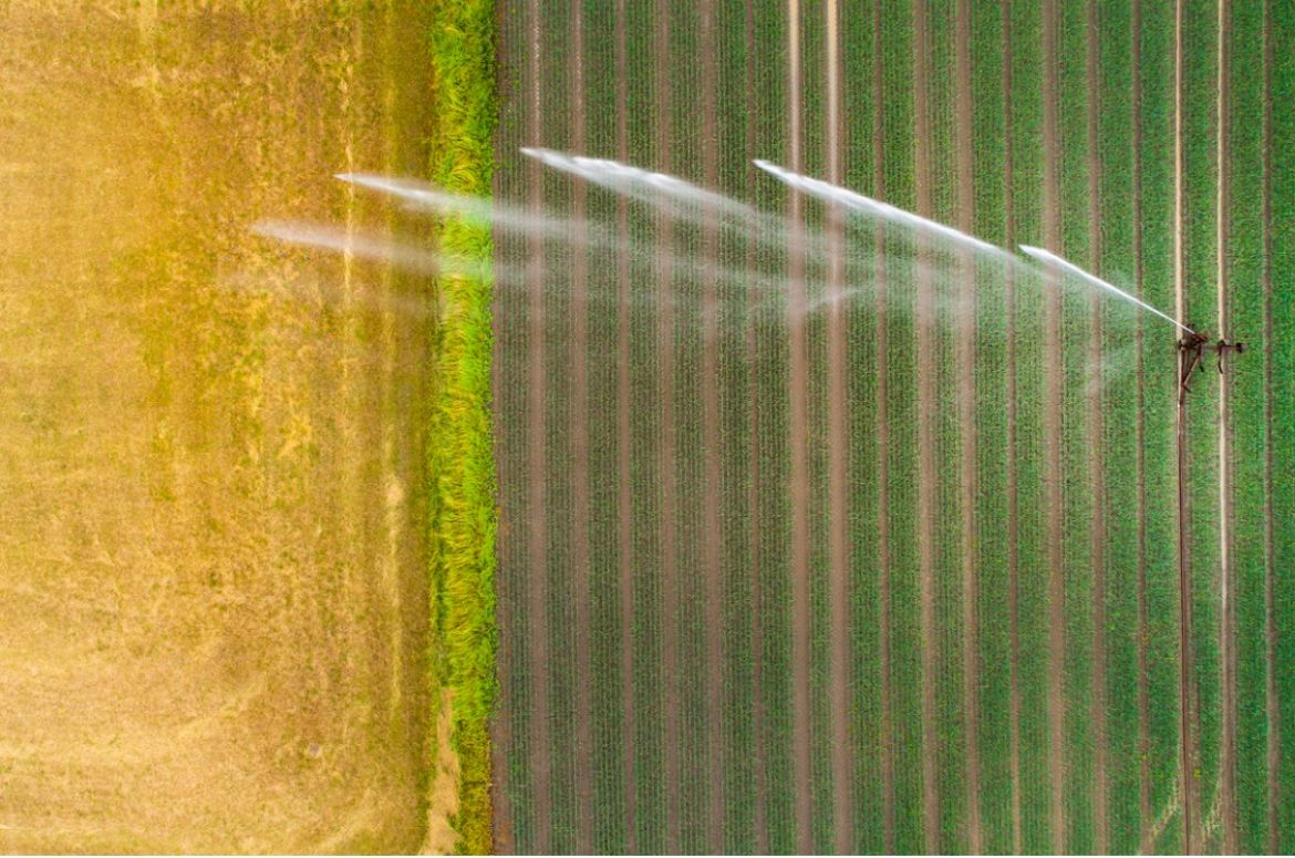 Agricultural sprinkler wheat field
